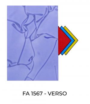 FA1567-Verso